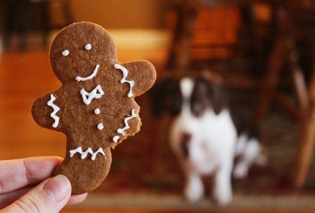 Christmas Recipes for Your Dog