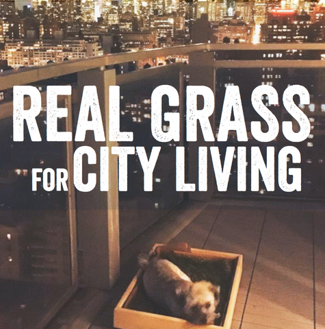 Real Grass for City Living