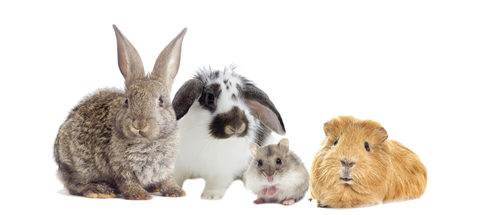 group of small animals including 2 bunnies, a hamster, a guinea pig and a mouse