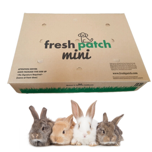 Rabbit Patch - Farm Fresh Grass Pad