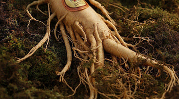 Ginseng: 5 Benefits of this Powerful Natural Weight Loss Stimulant