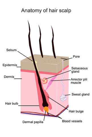 dry scalp and hair loss