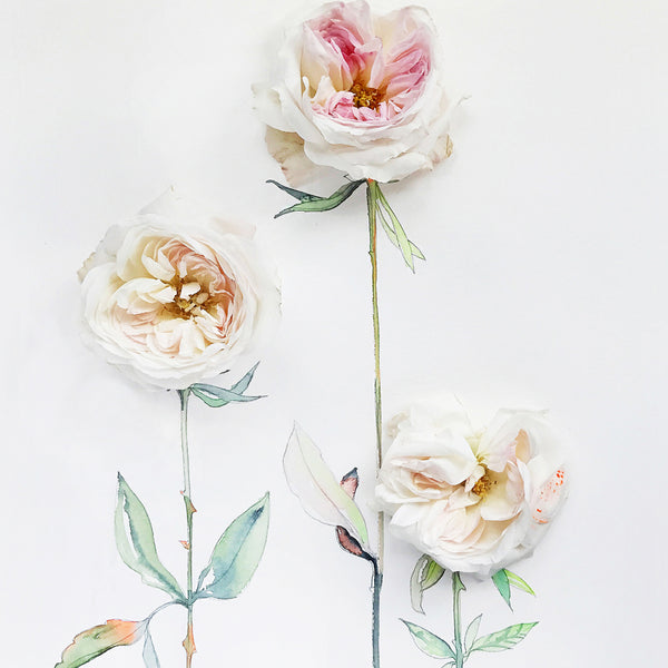 And Garden Rose Makes Three - Watercolor Fragments Art Print