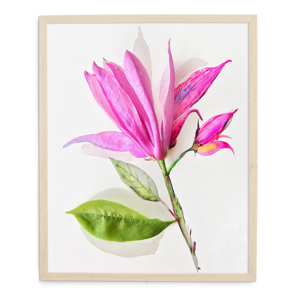Magnolia di, ob-la-da - Watercolor Fragments Art Print
