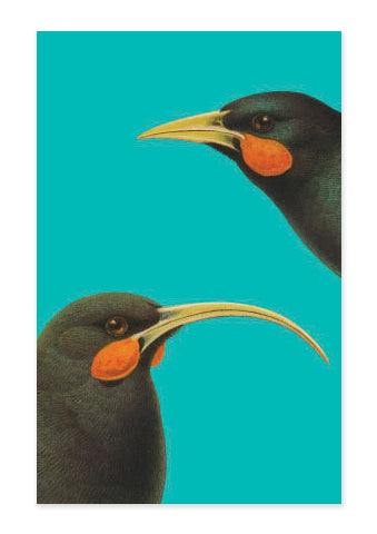 Bright Huia - Tea Towel - Design Withdrawals - Design Withdrawals