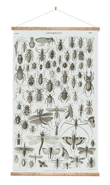 Entomology - Bugs - Wall Chart - Design Withdrawals - Design Withdrawals