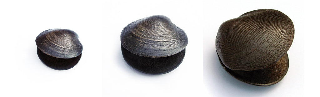 Double Cockle - Koa Bronze - Design Withdrawals