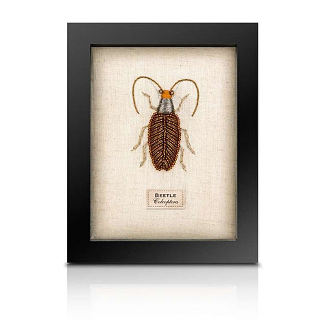 Beaded Feeler Beetle from the Cabinet of Curiosity
