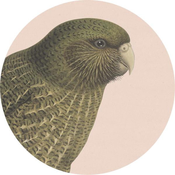 Coasters - Hush Bird Range