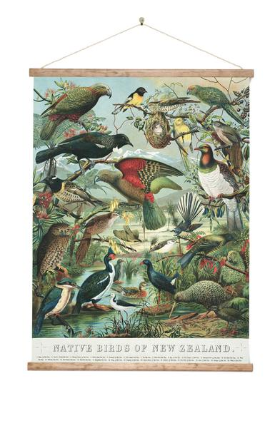 Native Birds of New Zealand - Wall Chart - Design Withdrawals - Design Withdrawals