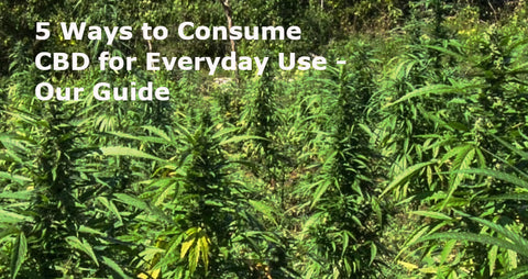 5 Ways to Consume CBD for Everyday Use - Our Guide