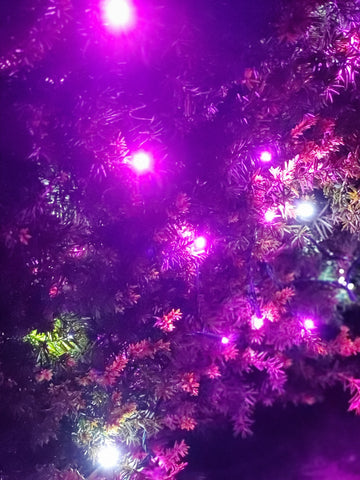 lights on bushes