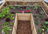 Outdoor Living Today - Raised Garden Bed 8 x 8 with Deer Fence Kit - Outdoor Living Today