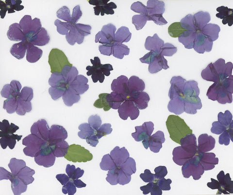 Purple Flowers by SNA