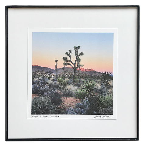 "8x8"" Joshua Tree Sunrise"