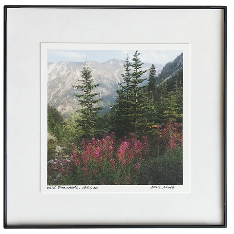 "8x8"" Fireweeds Wallowas"