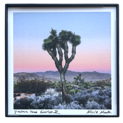 "4x4"" Joshua Tree Sunrise II"