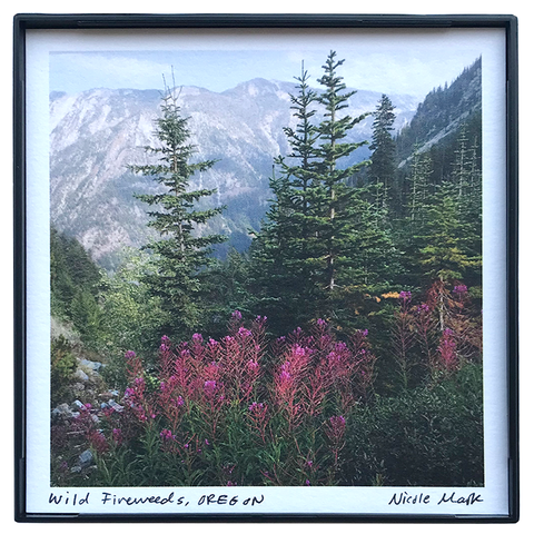 "4x4"" Fireweeds Wallowas"