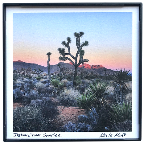 "4x4"" Joshua Tree Sunrise"