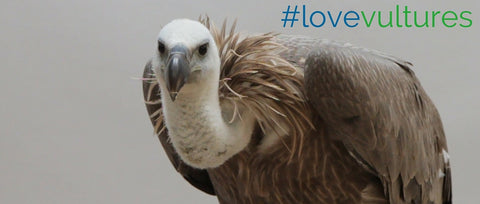 Love Vultures!