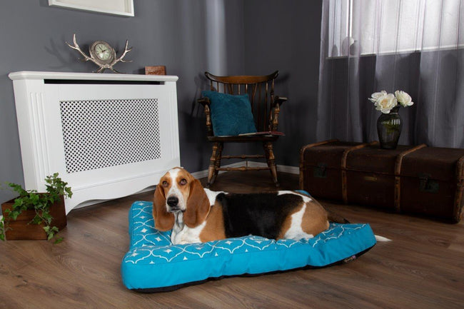 #ScruffsLoves: The New Casablanca Collection & Self-Cooling Beds Make Our Top List for June 2019