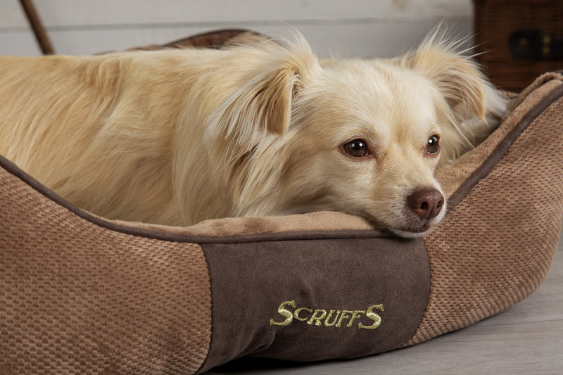 Does your dog's bed match your home decor?