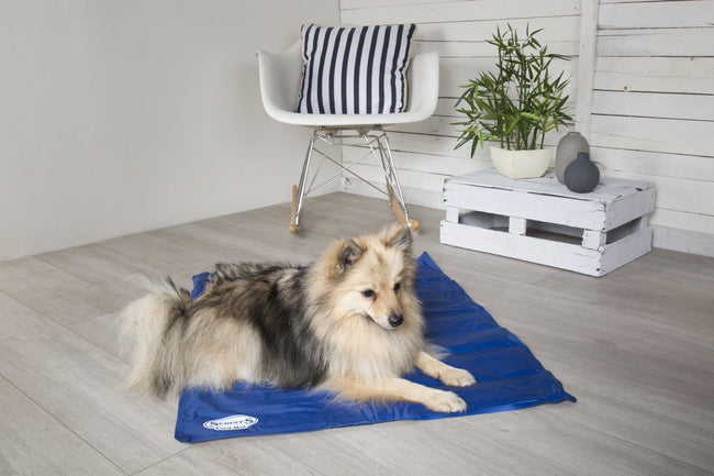 Keep Cool. Carry on. Win a FREE Cool Mat from Scruffs® this May