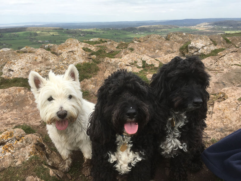 Dog-Friendly Cottages from Premier Cottages
