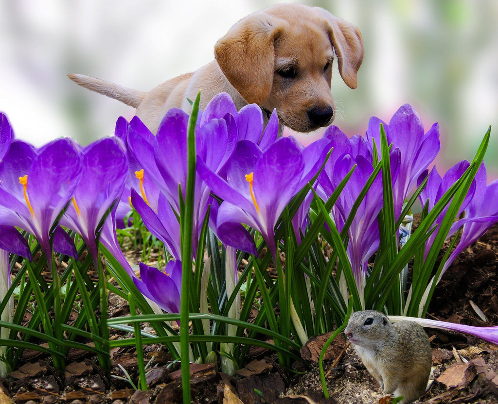 Pet Care Advice this Spring, from Leading Vets at PDSA