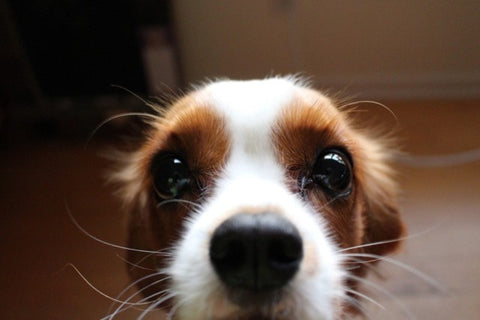 A dog's whiskers can sense changes in airflow