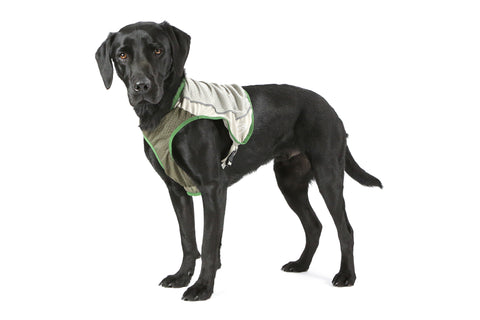 Scruffs Insect Shield Dog Vest