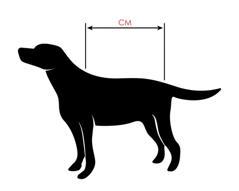 How To Measure Your Dog For a Coat