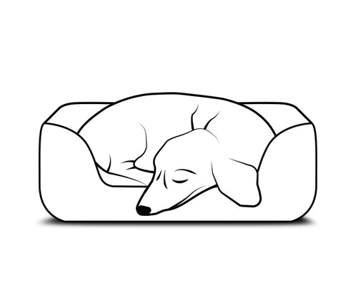 dog curled up on a bed