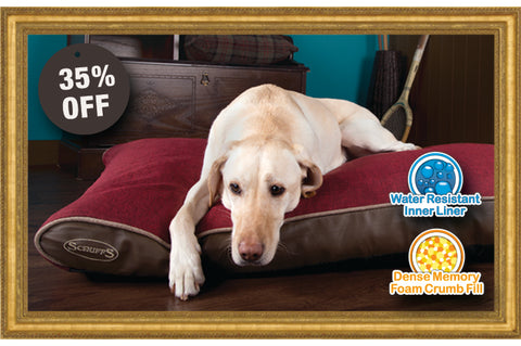 treat your pet & we'll treat you to 35% off
