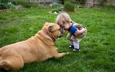 Dogs have the same intelligence level as 2-year old toddlers!