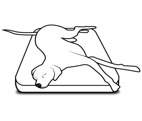 a dog sprawled out on a bed