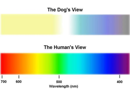 Dogs can see in colour