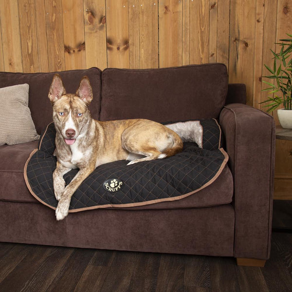 Wilton Sofa Bed - Black Dog Bed Scruffs®