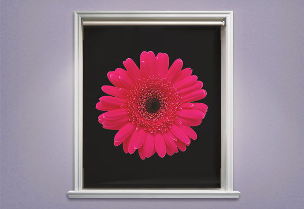 Pink Daisy on Black Roller Shades