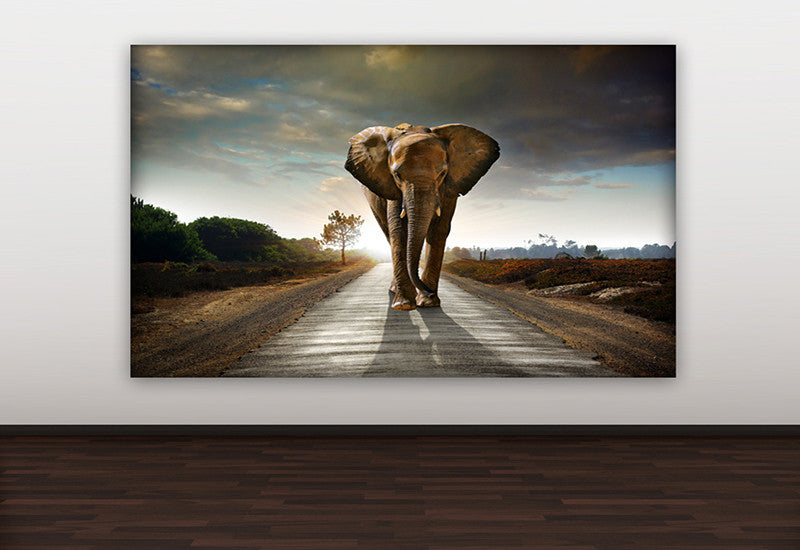 Lone Elephant Canvas