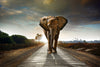 Lone Elephant Wall Decal