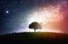 Lone Tree Magical Sky Wall Mural