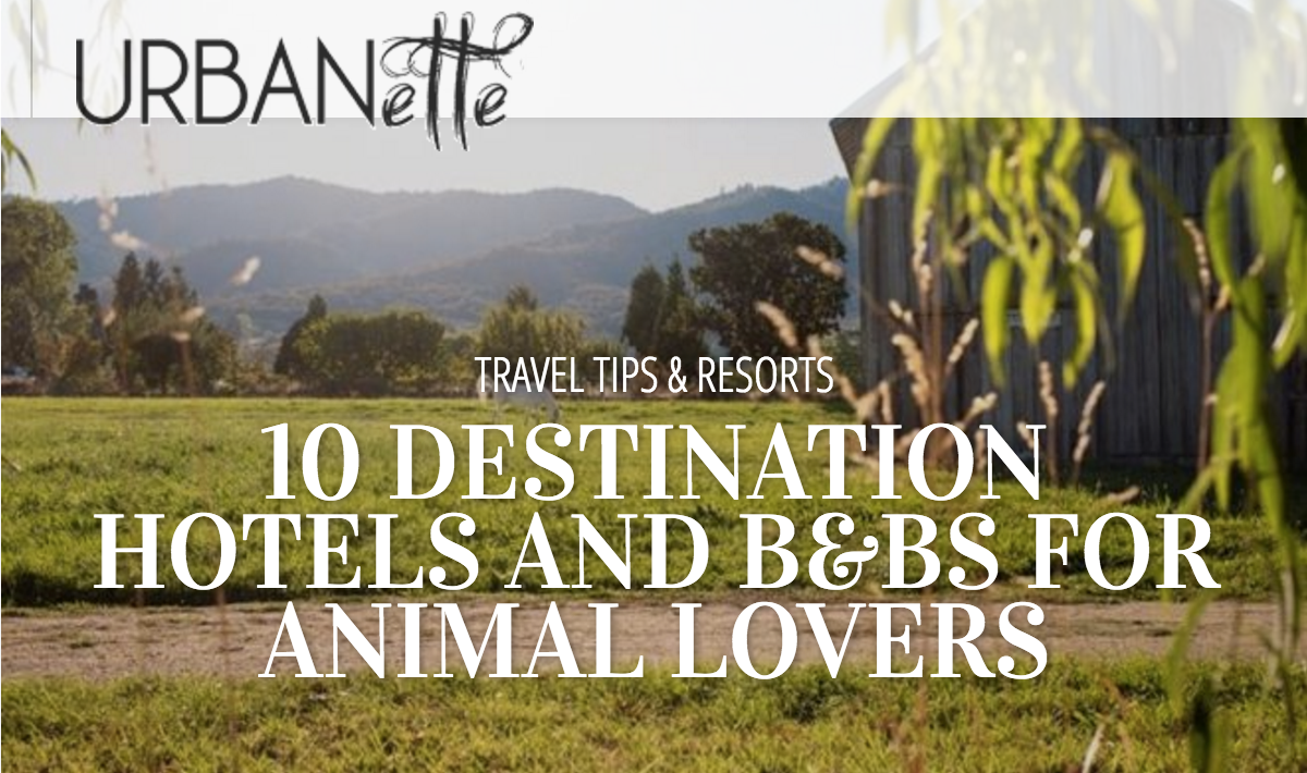 10 Destination Hotels and B&Bs for Animal Lovers