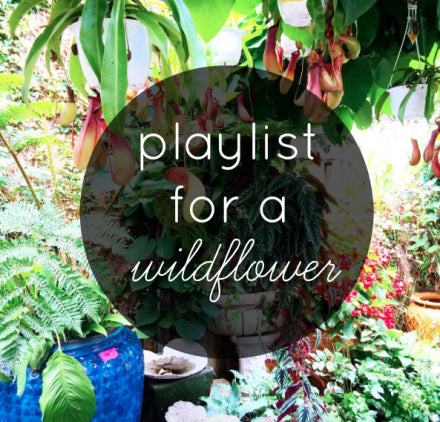 the friendly fig, playlist for a wildflower