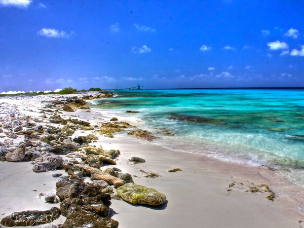 Planning a Shore Diving Trip to Bonaire