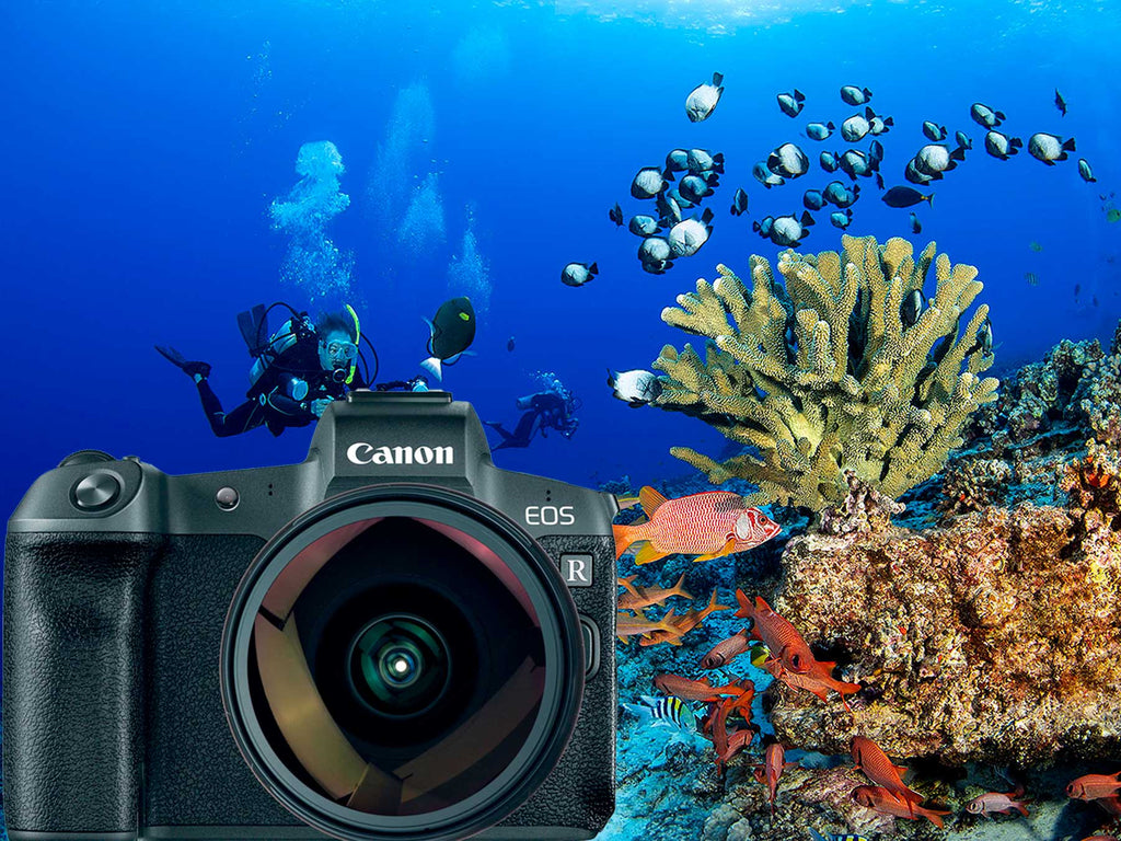 Transitioning to Canon Full Frame Mirrorless | Canon EOS R Underwater Photos