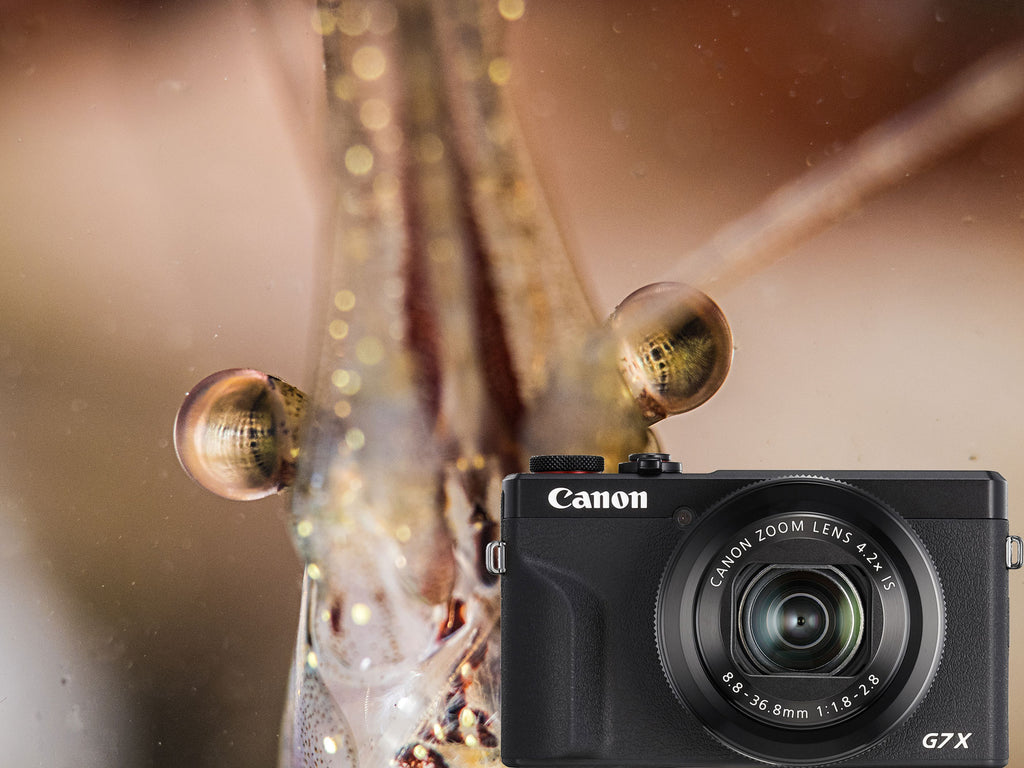 Canon PowerShot G7 X III Underwater Photos