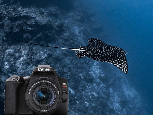 Canon EOS Rebel SL3 250D Underwater Photos