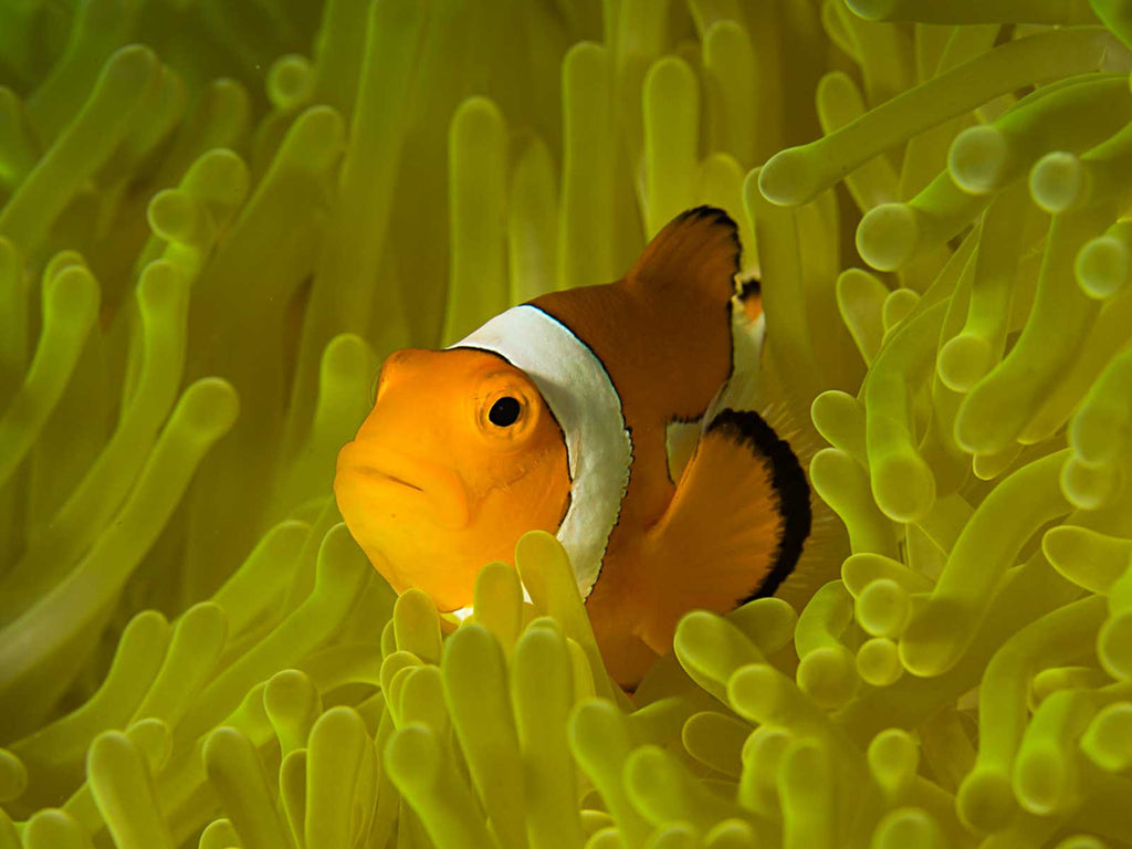 Clownfish Underwater Camera Settings