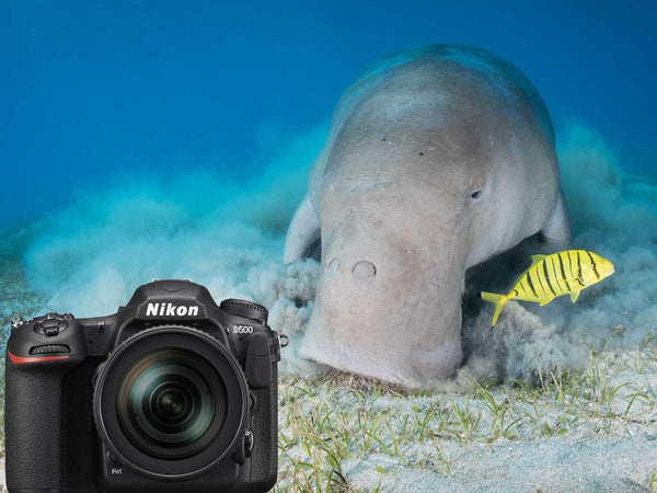 Nikon D500 DSLR Underwater Photos
